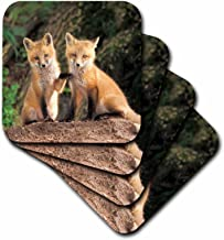3dRose CST_83613_3 Red Fox Pup in Front of Den-Na02 Aje0310-Adam Jones-Ceramic Tile Coasters, Set of 4