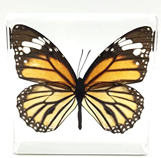acrylic framed real butterflies