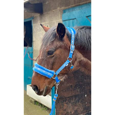 Equipride Horse Print Faux Lined Nylon Headcollars with Matching Lead Rope PINK Mini Shetland