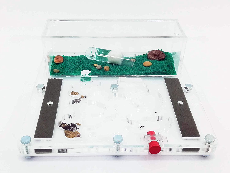 Anthillshop.es - Hormiguero 15 x 15 galería Natural Espuma acrílico - con Hormigas Incluidas.