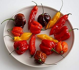 Hot Chili Pfeffer Mischung - Pepper - 20 Samen