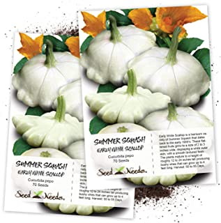 Seed Needs, Early White Scallop Summer Squash (Cucurbita Pepo) Twin Pack of 45 Seeds Each Non-GMO