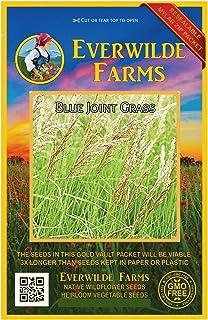 Everwilde Farms - 1 Oz Blue Joint Grass Native Grass Seeds - Gold Vault