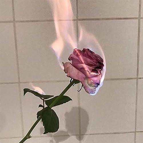 Image result for burning roses