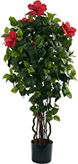 Best large hibiscus tree Reviews