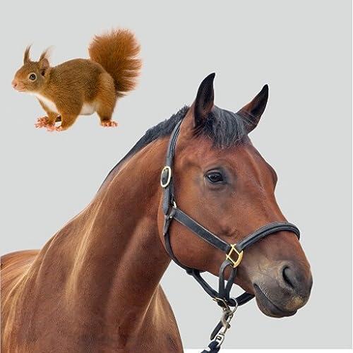 Enzyklopädie Tiere für Kinder