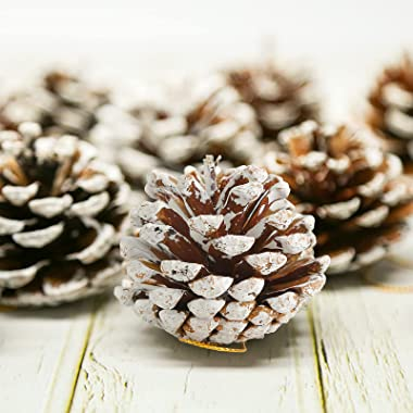 JOHOUSE 24PCS White Pine Cones, Snow PineCones Christmas Pine Cones Natural Pine Cones for Autumn and Winter Decor Christmas
