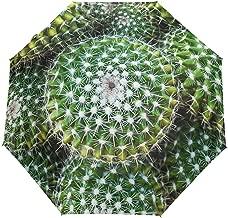 Mejor Golden Barrel Cactus de 2020 - Mejor valorados y revisados