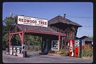 16 x 24 Gallery Wrapped Framed Art Canvas Print of World's Largest Redwood Tree Service Station 1936, Angle, Route 101, Ukiah, California 1991 Roadside Americana Ready to Hang 50a