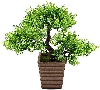 Best magnolia bonsai tree care Reviews