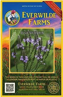 Everwilde Farms - 2000 Blue Vervain Native Wildflower Seeds - Gold Vault Jumbo Seed Packet