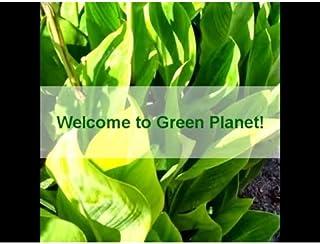 Green Planet Video