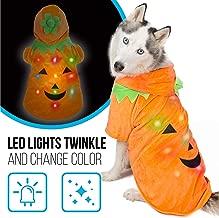 Best cat in a pumpkin costume Reviews