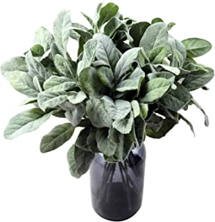 SHACOS 12 PCS Artificial Flocked Lambs Ear Spray Lamb Ear Stems Foliage Picks Artificial Greenery Plant for Home Wedding DIY Craft Floral Arrangement (12 PCS, Green)
