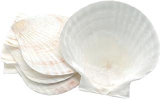 Nantucket Seafood Natural Baking Sea Shells, sizes may vary from 4.5