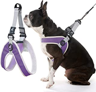Gooby - Simple Step-in Harness III, Small Dog Harness Scratch Resistant Breathable Mesh, Purple, Small