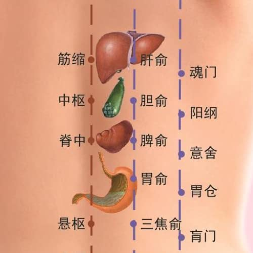 Chinese Medicine-Meridians & Points