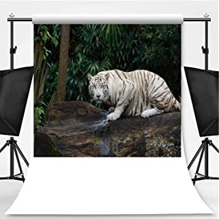 White Bengal Tiger in a Jungle Photography Backdrop,106609 for Video Photography,Flannelette:6x10ft