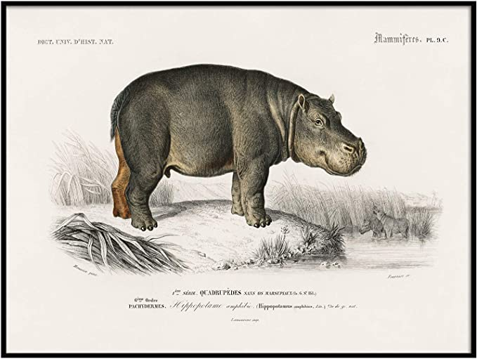 COO718 american animal life Emerge Print vintage zoology Vintage Drawing Poster Wall Art Antique Space Painting animals painting