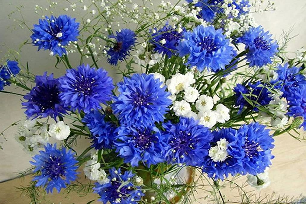 21secret 5D Diamond Diy Painting Full Round Drill Handmade Blue and White Flowers Cross Stitch Home Decor Embroidery Kit hy2915893