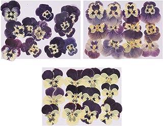 EXCEART 36Pcs Fleurs Pressées Naturelles Bricolage Pensée Fleur Séchée Fleurs Pressées pour L'artisanat pour L'artisanat ...