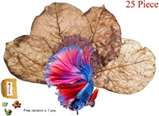 indian almond leaves betta fin rot