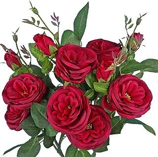 Best garden cabbage rose Reviews