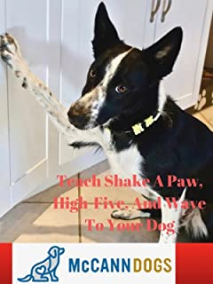 Teach Shake A Paw, High-Five, And Wave To Your Dog