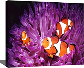 DIY Digital Oil Painting Set Fish Topical Saltwater Clownfish amphiprion ocellaris Beautiful Paint by Numbers Kits for Adu...