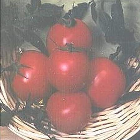 10g ORG/ÁNICA Tomate Roma Semillas ~ 3500Ct Producci/ón MAYOR tomates no GMO EE.UU.