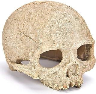 (ST TS) スカル 骸骨 爬虫類 両生類 昆虫 隠れ家 シェルター 飼育 ケース アクアリウム オブジェ ドクロ