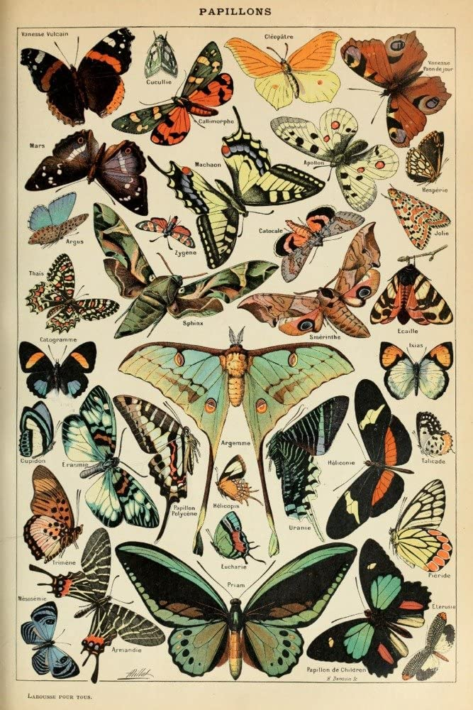 Butterflies C Vintage Bookplate Artwork Manufacturer direct delivery Ranking TOP17 82107 Millot Adolphe
