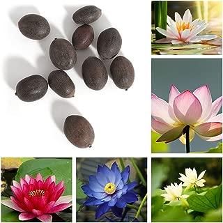 Trenton 10Pcs Water Lotus Flower Plant Bowl Pond Bonsai Seeds for Home Garden Yard Decor (Mixed Color)