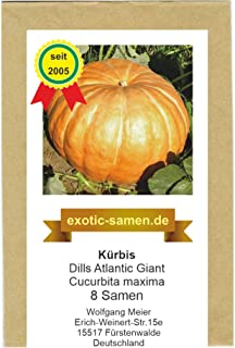 Kürbis Riesenkürbis - Dills Atlantic Giant - Rekordkürbis - 8 Samen