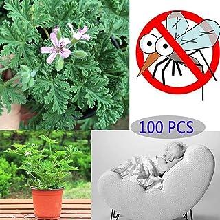 TankMR Farms Semillas de citronela para plantas Mozzie Buster repelente de mosquitos para jardín, balcón o patio
