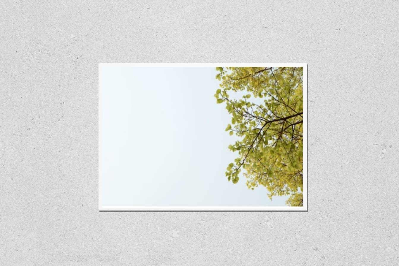 KwikMedia Overseas parallel import regular Spring new work one after another item Poster Reproduction of Fresh Leaf in Pho Spring