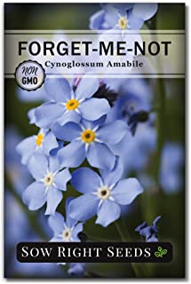 Sow Right Seeds - Forget-Me-Not Seed Packets to Plant (Cynoglossum amabile) - Full Instructions for Planting and Growing a Flower Garden; Non-GMO Heirloom Seeds; Wonderful Gardening Gift (1)