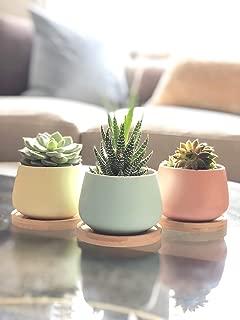 Chez JuJu Assorted Blue Pink Yellow Round Ceramic Succulent Pots 3