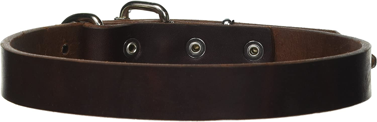 Dean and Tyler B and B , Basic Leather Dog Collar with Strong Nickel Hardware  Brown  Size 20Inch by 1Inch  Fits Neck 18Inch to 22Inch