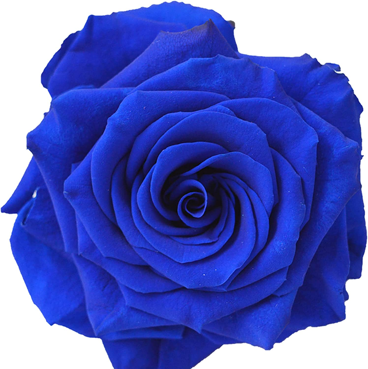 Charming Style Exotic Ranking TOP10 Beautiful Cut Rose Cheap sale Gift Surprise S Flowers
