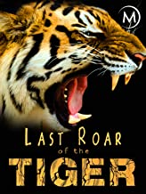 Last Roar of the Tiger