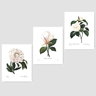 (Set of 3) Botanical Prints (White Home Decor Room, Redoute Flower Wall Art) Camellia, Peony, Magnolia – 8x10 Unframed