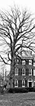 Tree with House by Erin Clark Art Print, 10 x 29 inches