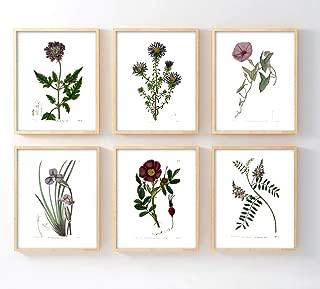 Ink. Inc. Botanical Prints- Purple Flowers- Set of 6 5x7 unframed Poster Prints