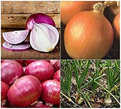 David's Garden Seeds Collection Set Onion Open Pollinated 4343 (Multi) 4 Varieties 1000 Seeds (Non-GMO, Open Pollinated, Organic)