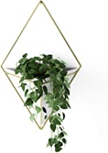 Umbra 470752-524 Trigg Hanging Planter Vase & Geometric Wall Decor Container - Great for Succulent Plants, Air Plant, Mini...