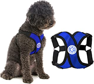 Gooby - Comfort X Step-in Harness, Choke Free Small Dog Harness with Micro Suede Trimming and Patented X Frame, Blue, Medium
