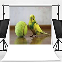 budgie photography