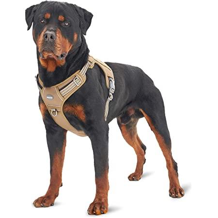 HARNAIS for dog Fox Pattern  harness Y dog  dog handmade  dog walk  harness solid dog  accessories small dog
