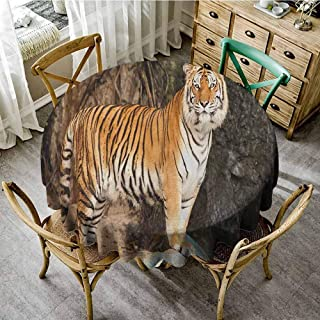 ScottDecor Circular Table Cover Tiger Portrait of an Alert and Angry Royal Bengal Feline Staring at Camera in Cave Print Multicolor Summer Round Tablecloth Diameter 50
